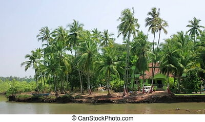 Palm grove on water's edge
