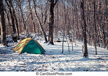 Tent in a snowy forest