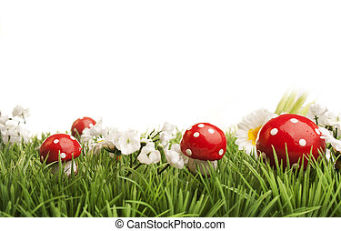 Meadow with daisies and fungus, white background