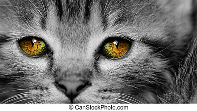 Tabby kitten - Close-up portrait of tabby house cat - yellow...