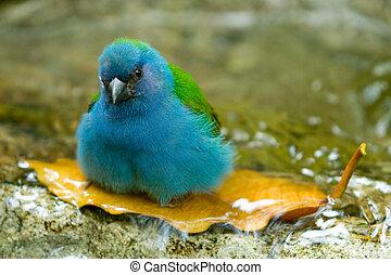 Bath - Little bird taking a bath