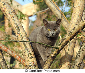 gray cat sitting on tree in Istanbul