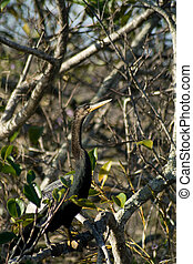 Everglades - Bird seen very commonly on the Everglades Park...