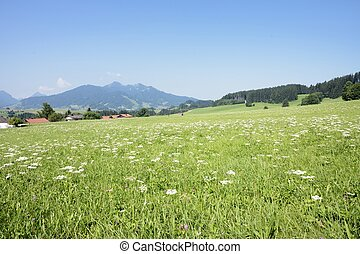 Lovely Allgaeu - Idyllic landscape in the Allgaeu Bavaria,...