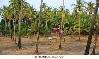 Palm trees in grove - Palm trees in in idyllic grove