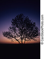 Silhouetted Tree in Sunrise