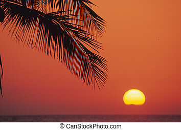 Palm Frond in Sunset - a palm frond is silhouetted in a...