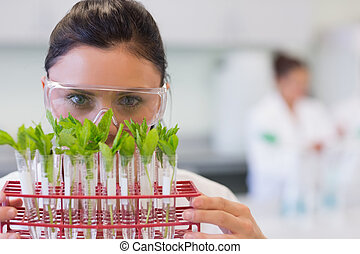 Female scientist with young plants at lab - Close-up...