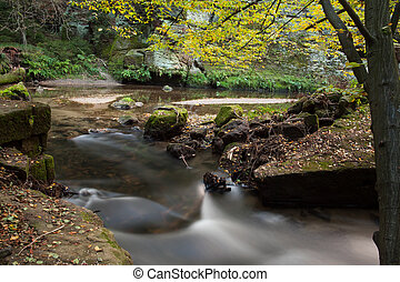 Rapids flowing along forest - Scenic shot of rapids flowing...
