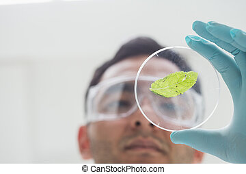 Scientist analyzing a leaf at the laboratory