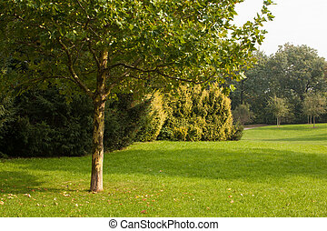 Trees and meadow - Peaceful view of trees and meadow