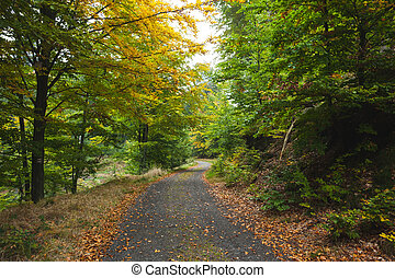 Scenic shot of narrow road along fo - Scenic shot of narrow...