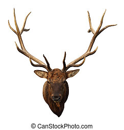 Deer Head with beautiful antlers isolated on white...