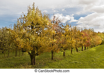 Orchard of fruit trees in a line