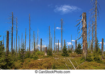 Waldsterben - Dying forests in the Bavarian Forest on the...