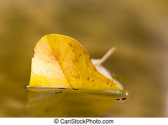 yellow autumn leaf on the water