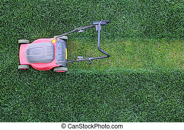 Grass cutter at the lawn - Grass cutter cuts the green lawn