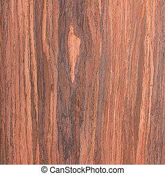 árbol, nuez, madera, grano, Plano de fondo