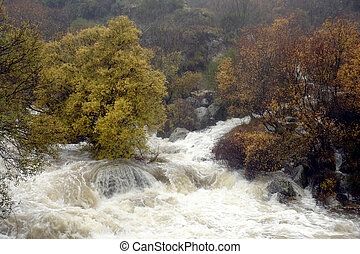 Water torrent flowing in serra da estrela (Portugal)