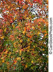 Autumn pattern