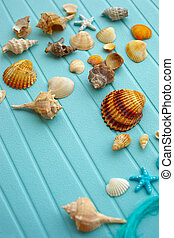 Seashells - different seashells collection on a blue...