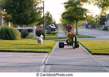 ambulante, perro, triciclo, vecindad