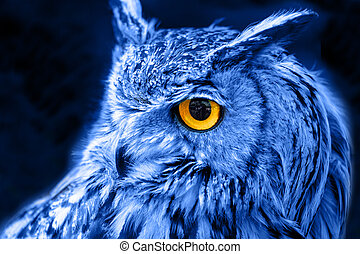 hibou, oiseau, animal
