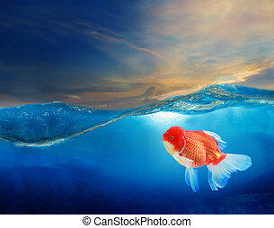 gold fish under blue water with beautiful dramatic sky