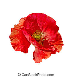Poppy red side view - One red poppy with a side view...