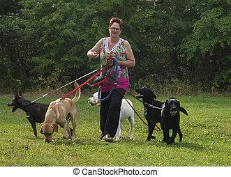 vrouw, Vier, groene, Wandelingen, gras, honden