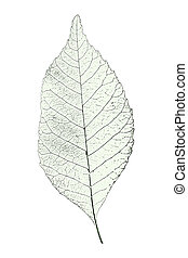 leaf over white