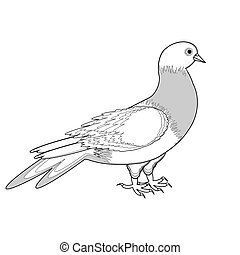 A monochrome sketch of a pigeon Vector-art illustration on a...