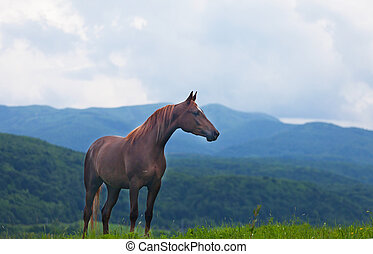 beautiful bay horse costs against mountains in evening light