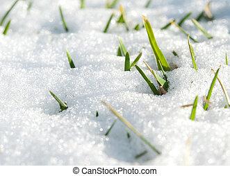 first green grass