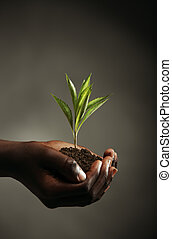 New life - African boy with seedling in his hands, close up