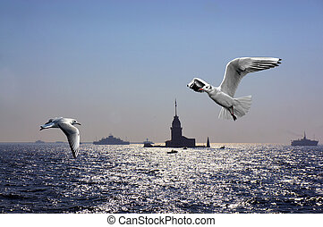 Seagulls over Bosporus in Istanbul with Maiden's tower and...