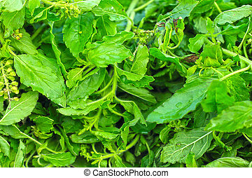 Holy basil at the market