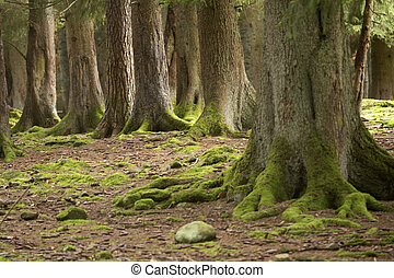 woods in autumn - forest, several woods with forest floor...