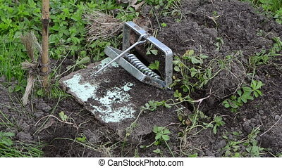 garden worker mole trap - Garden worker hand take out traps...