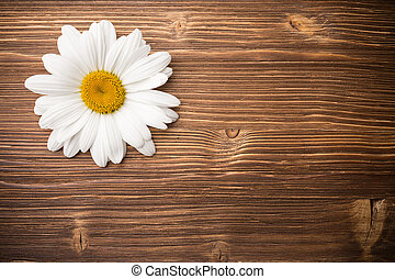 Camomile flower. - Chamomile flower on a wooden background.