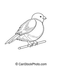 A monochrome sketch of a bird (bullfinch). Vector-art...