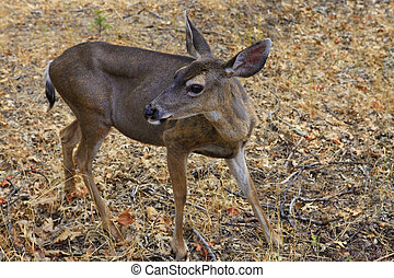 Doe detailed portrait isolated on forest background...