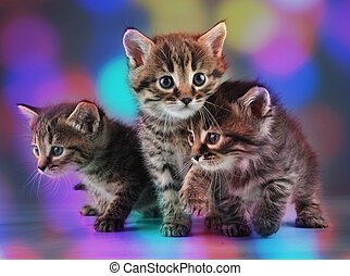 group of cute little kittens - Group of cute little kittens...