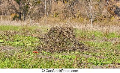 pile of dry weeds in the garden