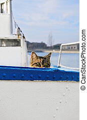 Sailor Cat  - Cat Peeking Out Over The Board Of The Ship
