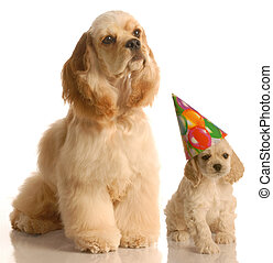 puppy\'s birthday