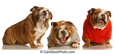 big joke - three dogs laughing hysterically
