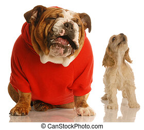 two dogs howling - english bulldog and cocker spaniel puppy...