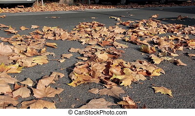 Foliage on the street - passing cars, autumnal streetscape