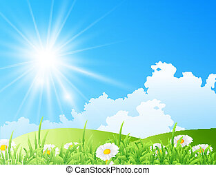 field of daisies with bright sun - Vector illustration of...